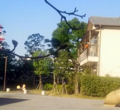 桂の木公園のフェンス1